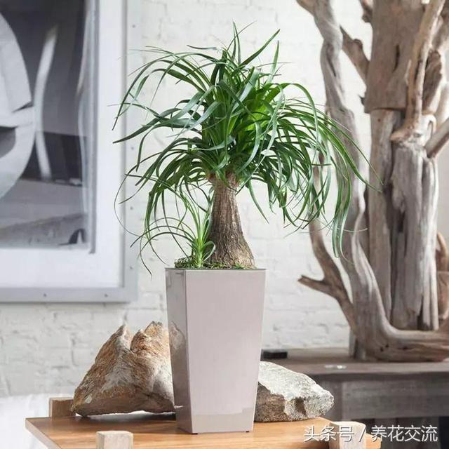 5種長相別致的室內耐旱盆栽,幾個月都不用照顧的植物 - 每日頭條