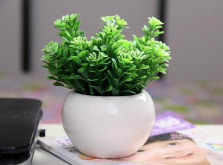 室內擺放哪些植物能夠招財?又能為家添福氣! - 每日頭條