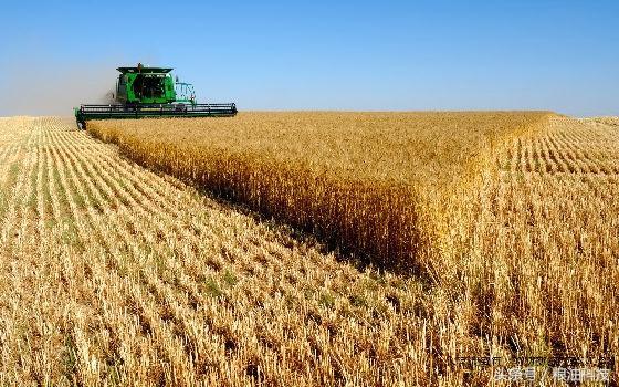 世界糧食日丨關注氣候變化與糧食安全 - 每日頭條