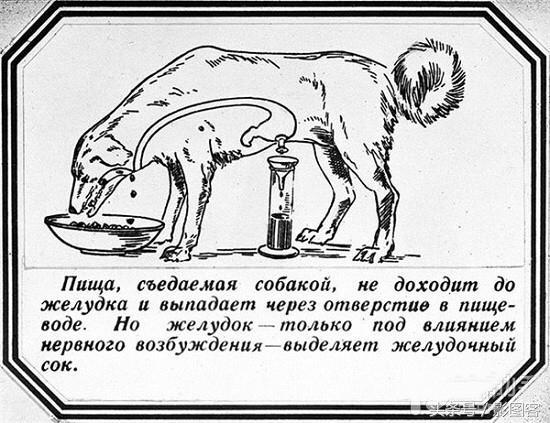 請認清調教的實質,只是巴甫洛夫的狗實驗 - 每日頭條