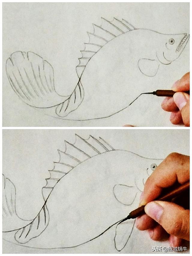 圖文教程 一條鱖魚的畫法步驟 - 每日頭條