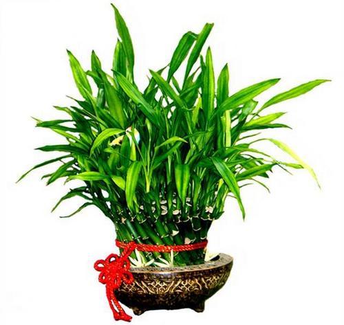 這10種常見植物的風水寓意你都了解嗎? - 每日頭條