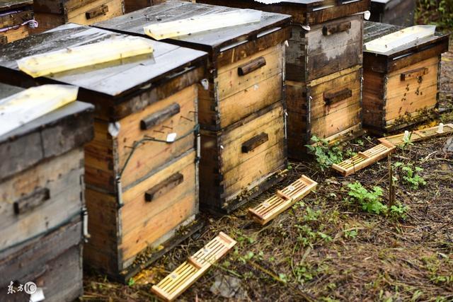 蜂頭領 中蜂蜂箱種類及參數 - 每日頭條