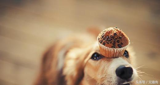 千萬別給你的狗狗吃這些東西! - 每日頭條