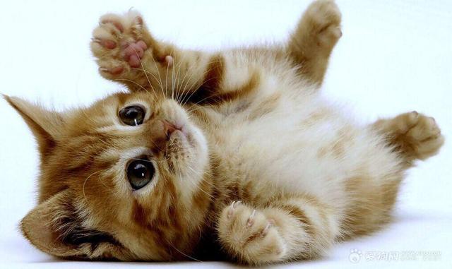 照顧小貓須知 幼貓飼養很簡單 - 每日頭條
