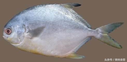 東海海域已全面解禁開捕,這些海鮮你一定沒吃過,甚至沒見過! - 每日頭條