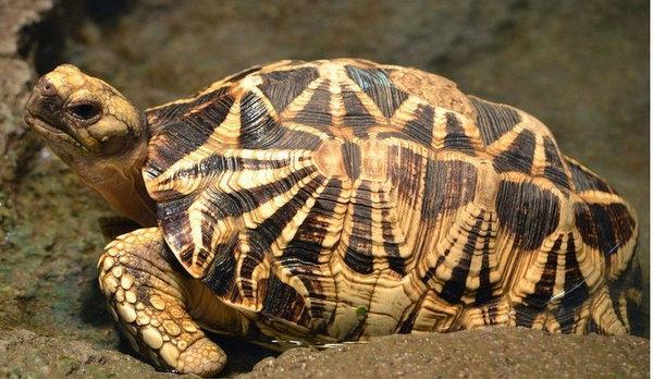 地球上10大最受歡迎的寵物龜。金錢龜榜首。蛋龜第五。你養了哪種 - 每日頭條