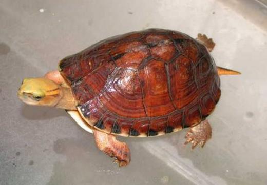 現在看還來得及!5招讓你的烏龜安全冬眠 - 每日頭條