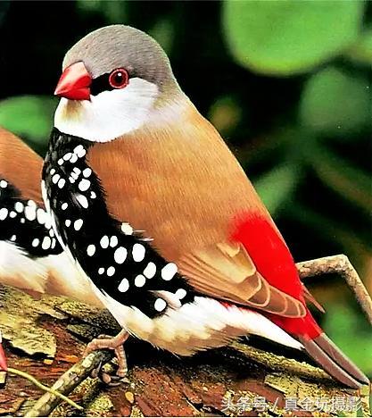 世界上罕見的艷鳥、可愛極了請欣賞 - 每日頭條