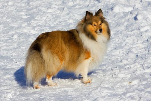 如何挑選適合自己的寵物狗——新手福利 買狗必看(一) - 每日頭條