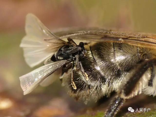 這些小昆蟲不僅不認識。竟連名字都不會念(*/\\*) - 每日頭條