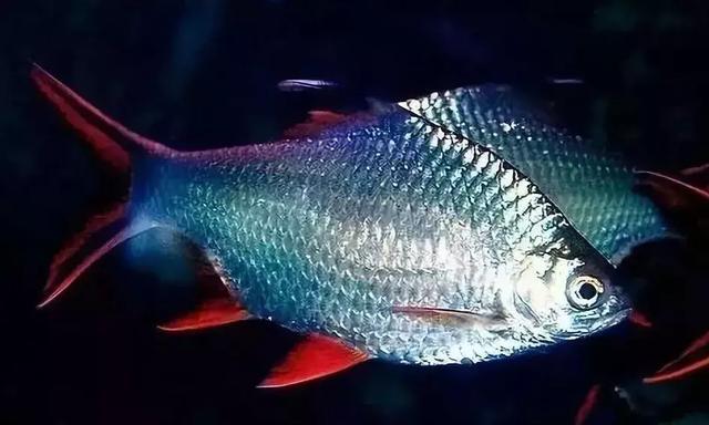 觀賞魚種類大全,一定有你喜歡的 - 每日頭條