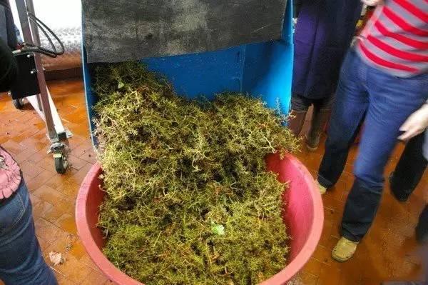 葡萄酒DIY製作方法 - 每日頭條