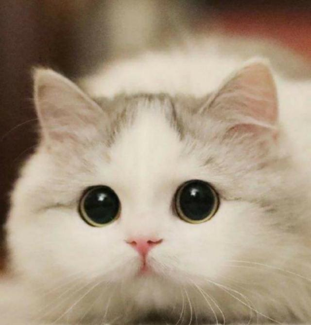 母貓生產幼貓沒有奶水怎麼辦?(怎麼飼養新生幼貓) - 每日頭條
