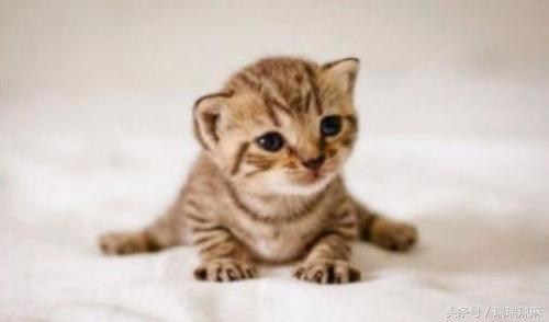 貓咪主食可以吃什麼,貓咪主食只能吃貓糧嗎? - 每日頭條