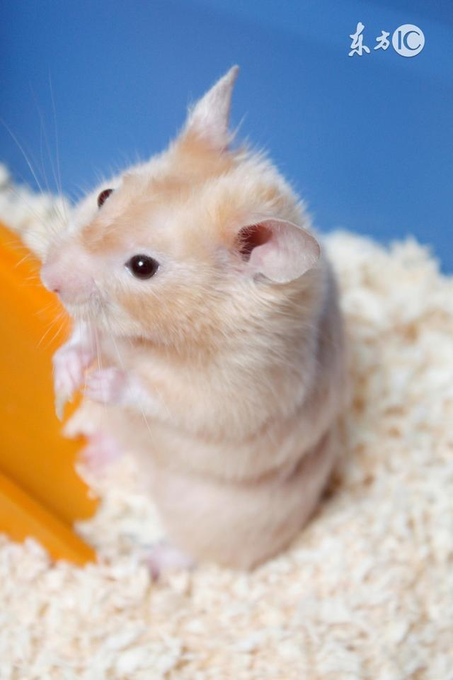 屬鼠的你:你是白天出生的還是晚上出生的?決定了你的財富 - 每日頭條