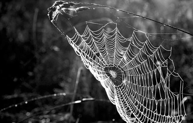 藏在身邊的美景:蛛網 - 每日頭條
