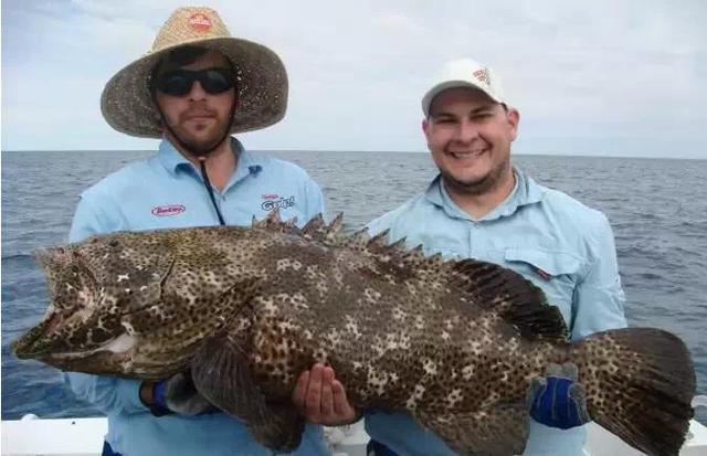 這些海鮮你都吃過嗎?史上最全最local澳洲海鮮大全! - 每日頭條