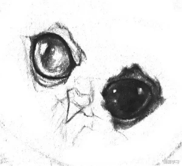 初級素描繪畫教程:素描小貓頭鷹,小鷹火烈鳥線描速寫素描畫法教程 - 每日頭條
