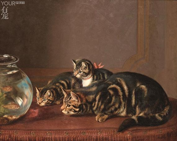 貓吃魚是天性?海里的魚和陸地上的貓是怎麼糾纏在一起的 - 每日頭條