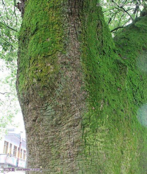 利用Photoshop把人像合成到古樹裡面 - 每日頭條