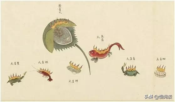 全四卷《海錯圖》帶你暢享紫禁城海底總動員 - 每日頭條