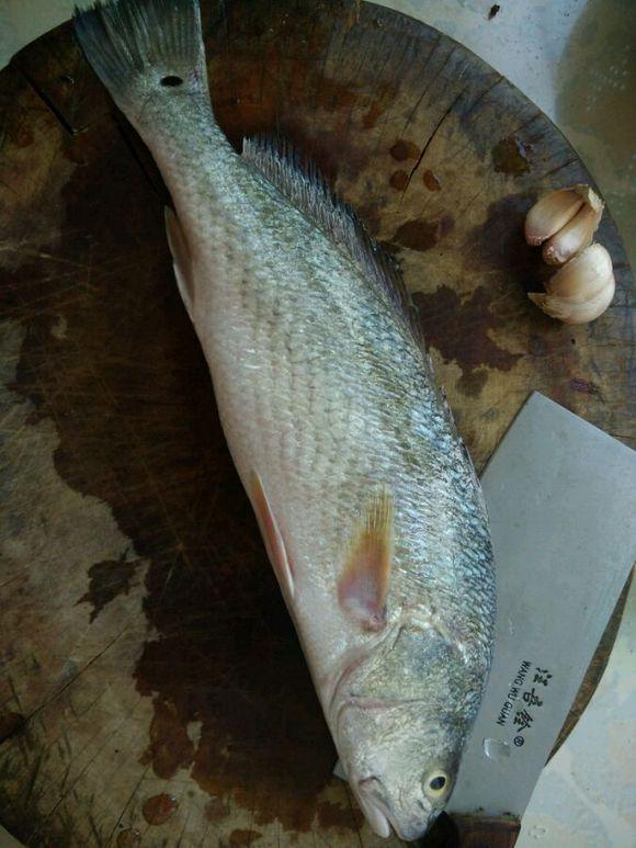 水邊長大,從來不缺魚吃,有些魚你可能都沒見過! - 每日頭條