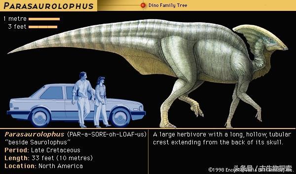 副櫛龍:會吹「笛子」的恐龍 - 每日頭條