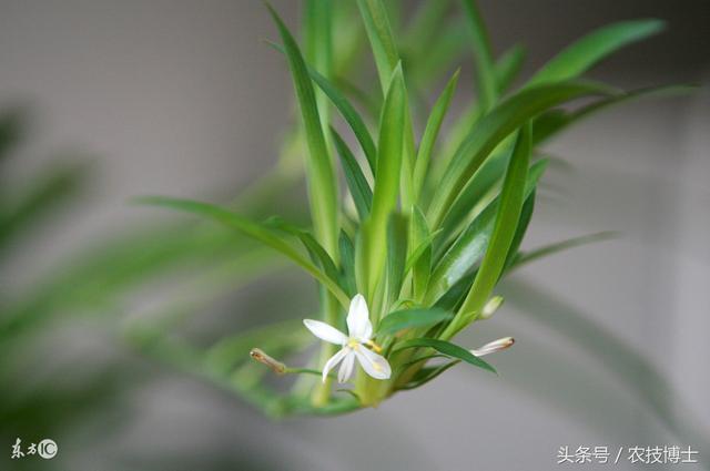 哪些花卉喜歡酸性的土壤? - 每日頭條