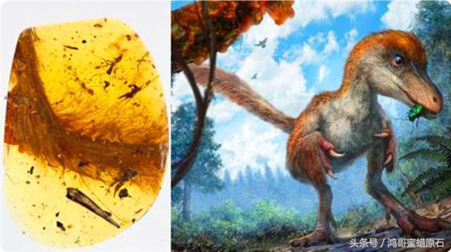 琥珀蜜蠟都是來自恐龍時代嗎? - 每日頭條
