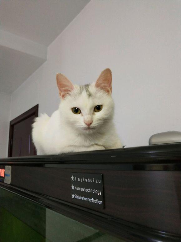四個月的小貓晚上一直嚎叫,家人打算散養,女孩的做法卻讓人暖心 - 每日頭條