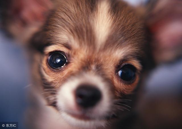 目前有哪些狗狗比較流行? - 每日頭條