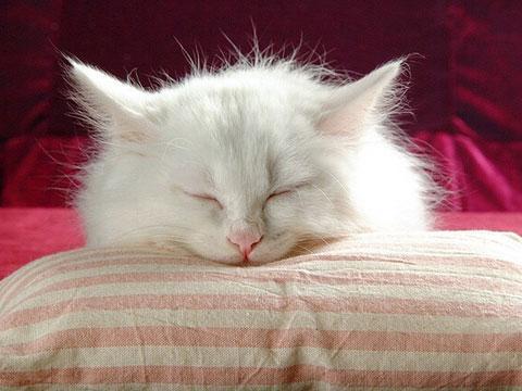 貓咪患貓狂犬病的癥狀及治療措施 - 每日頭條