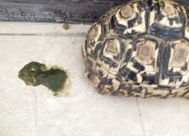 新手養寵物龜入門指南—適合買哪些龜?如何飼養?這裡都有 - 每日頭條