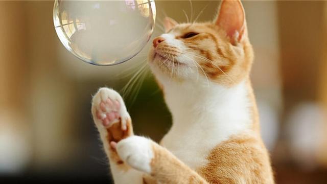 貓主子白天不愛開口,卻總愛晚上叫 - 每日頭條