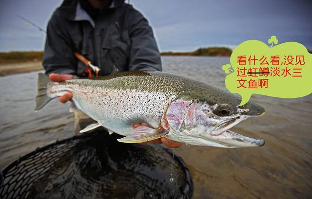 虹鱒是不是三文魚,生吃會不會要人命 - 每日頭條