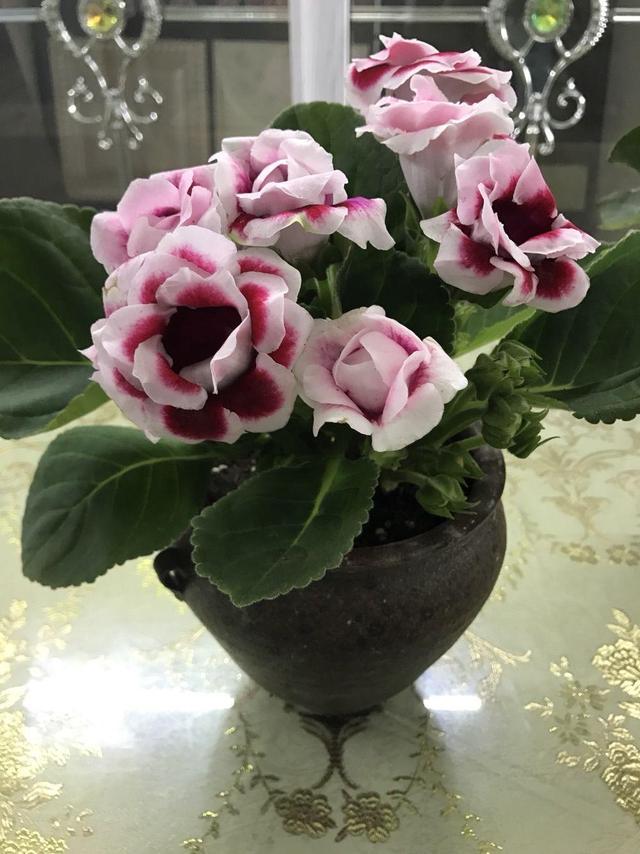 給大家分享種植大巖桐花的一些細節 - 每日頭條
