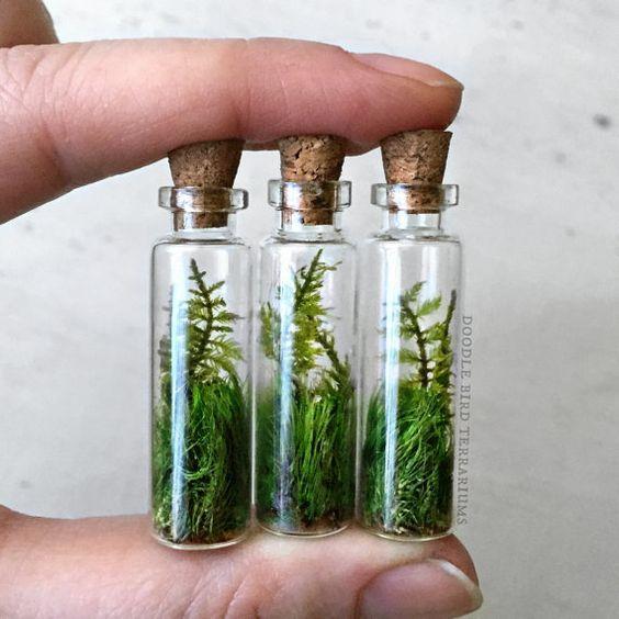 苔蘚可以美的這的如此不可救藥 - 每日頭條