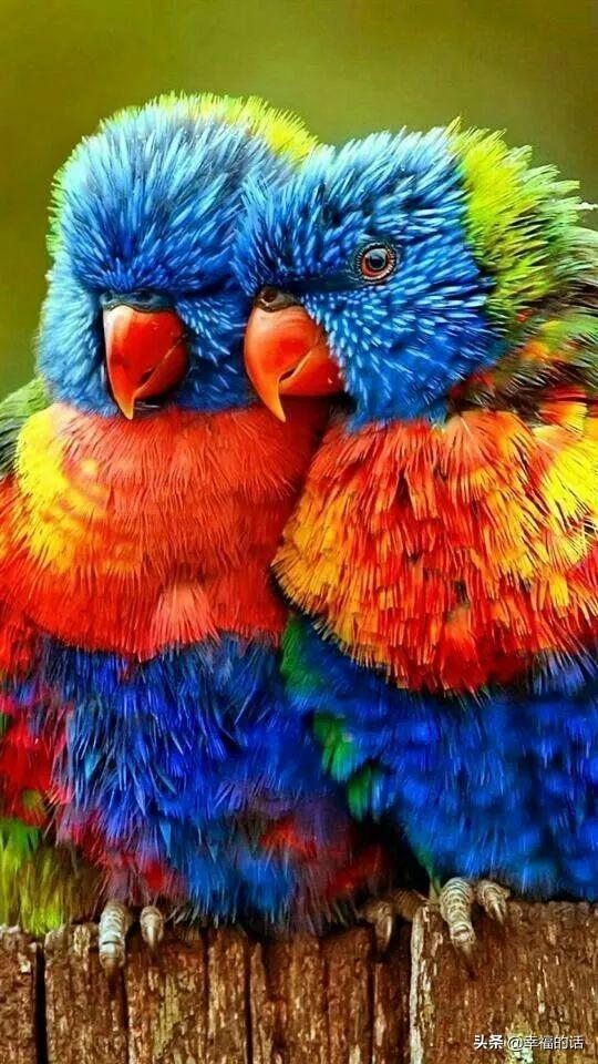 天吶!怎麼會這麼好看的鳥。簡直和畫一樣 - 每日頭條