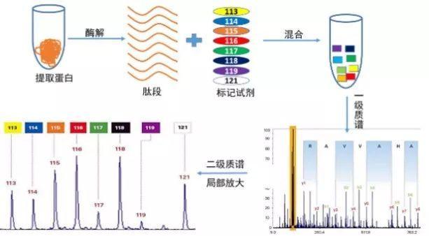 6大秘籍,讓你的蛋白質組研究6到飛起~ - 每日頭條