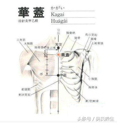 人體常見50個穴位位置,作用,按摩手法,圖文取穴,純乾貨 - 每日頭條