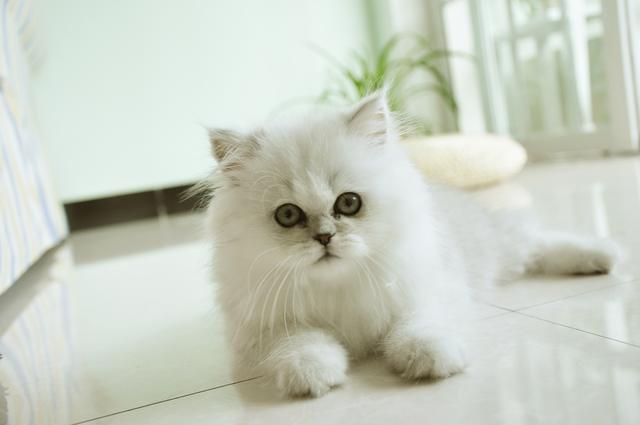 貓博仕教你如何養護幼貓? - 每日頭條