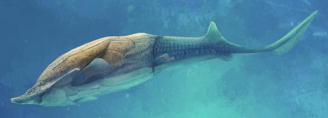 古魚新發現揭開人類頜骨來源之謎 - 每日頭條