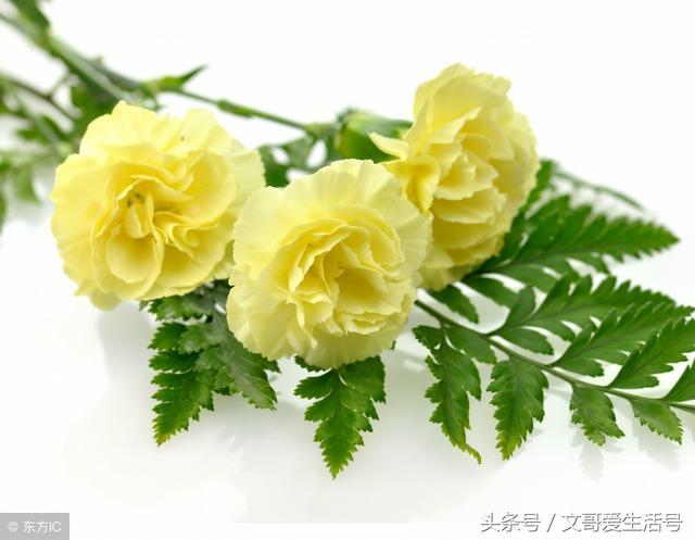 花語-同一種花,不同顏色表達的含義竟然大不同,驚到了 - 每日頭條
