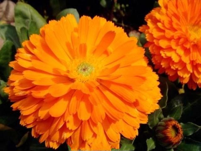 幾種常年開花的花卉植物。在陽臺上養殖一年四季都開花 - 每日頭條