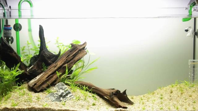 草缸造景教程。三分鐘學會造景流程。觀賞魚要是會說話都得謝謝你 - 每日頭條