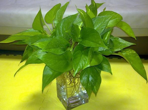 辦公室盆栽怎麼選?這幾個盆栽讓辦公室充滿生機 - 每日頭條