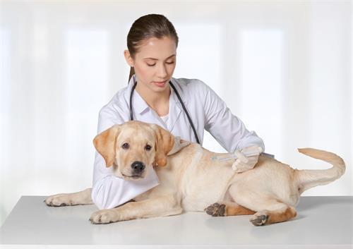 狗狗拉軟便超臭。狗狗便便有點軟很臭 - 每日頭條
