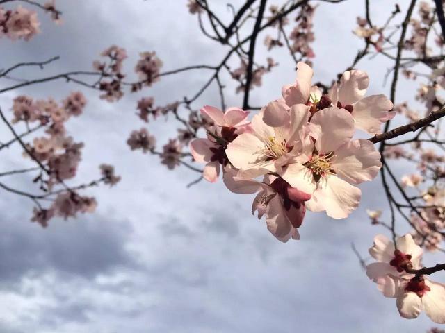 美圖你知道春天是什麼樣子?三月的「花季」里每一種都是春天 - 每日頭條