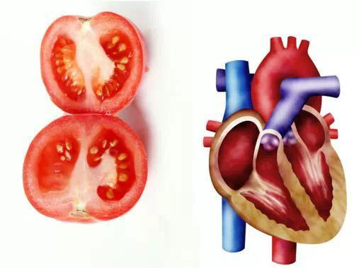 吃啥補啥,那些和人體器官相對應的蔬果 - 每日頭條